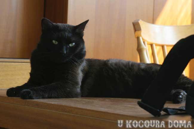 Černý kocour, náš černý kocour