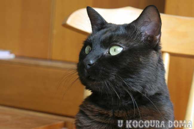 Černý kocour čučí