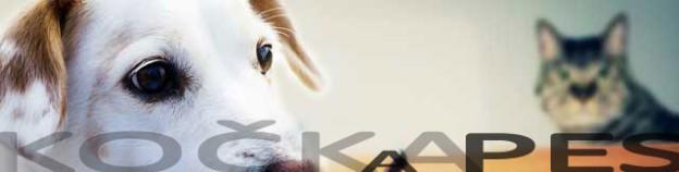 ax_kocka-a-pes