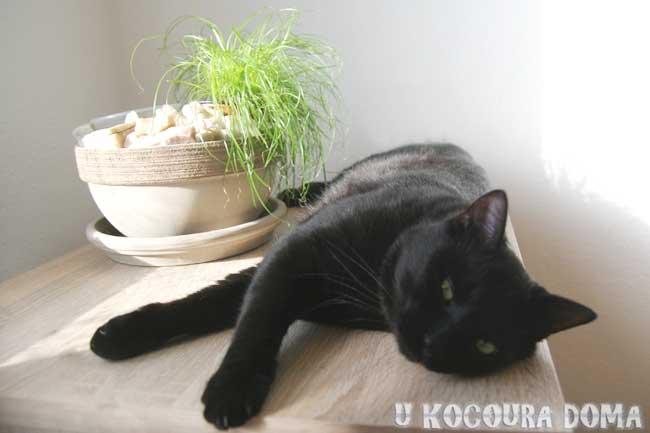 Kocour a kočičí tráva