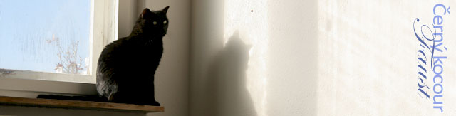 Černý kocour Faust_banner