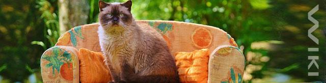Kočka na pohovce