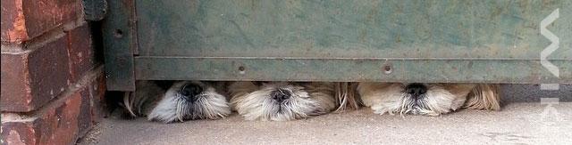 Tři psi pod dveřmi
