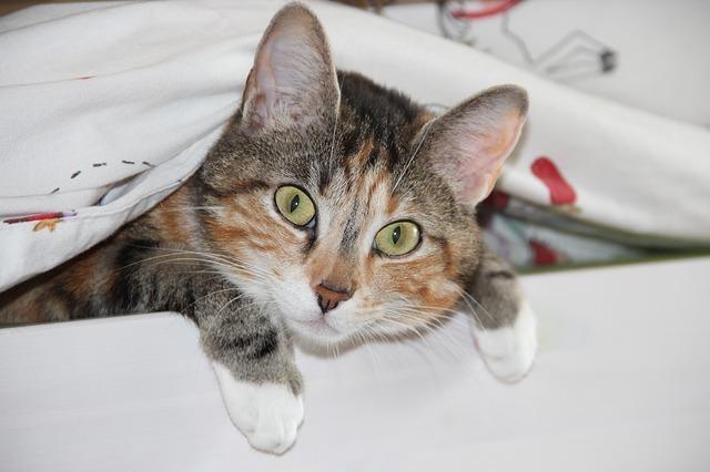 Kočka, kočičí oči, kočičí uši