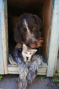 dog-and-cat-211503_1280
