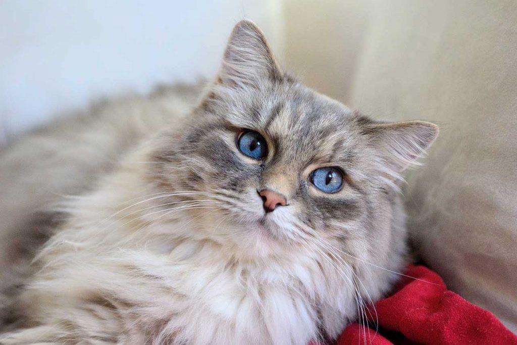 Kočka - srst