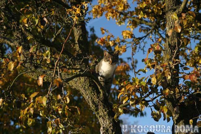 kote-podzim-2
