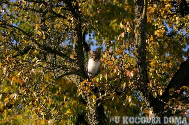 kote-podzim