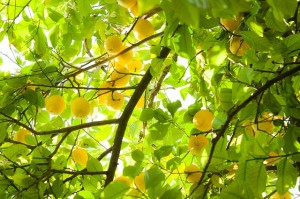 Citron - silice, šetrný úklid
