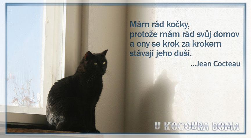 kocour1
