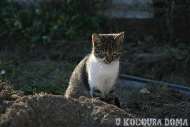 kote_podzim_b3