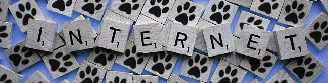 Mazlíčci online, kočky a psi na internetu