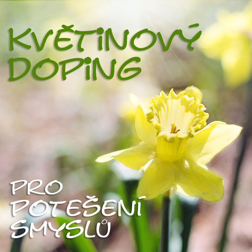 Květinový doping, jarní květy, cibuloviny