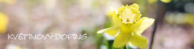Květinový doping, jarní květiny, cibuloviny