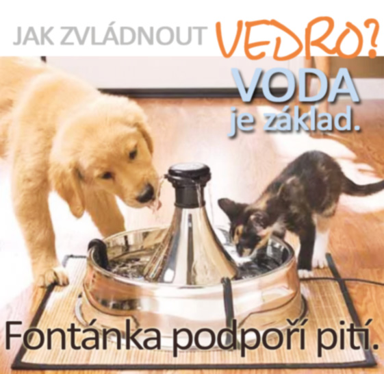 Fontánky pro kočky, fontánky pro psy