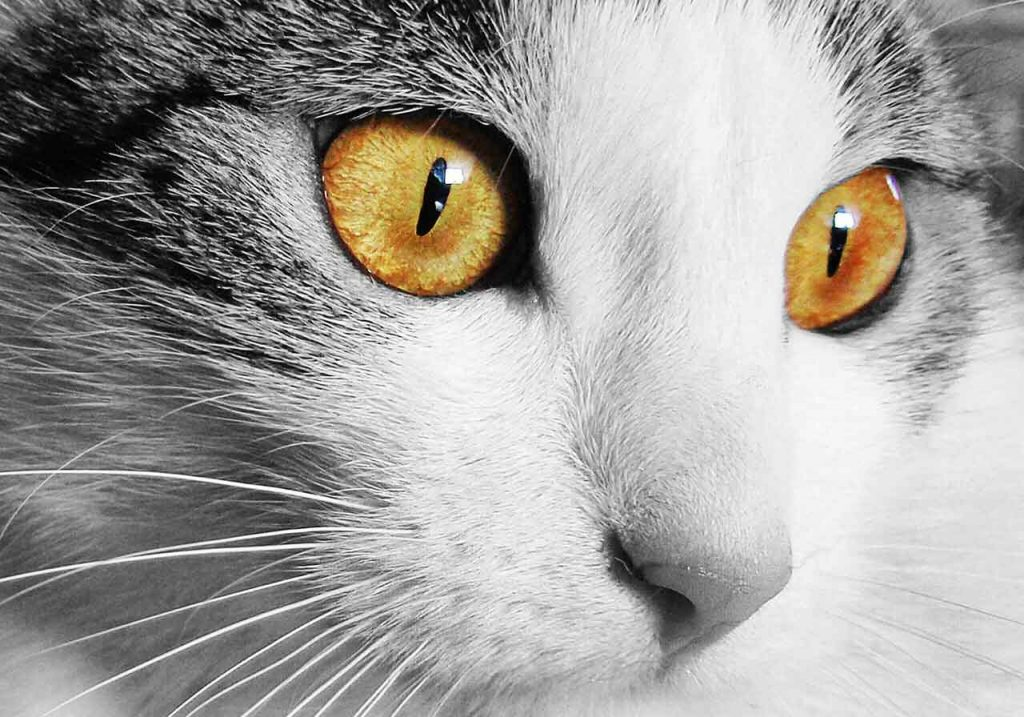 Kočičí oči