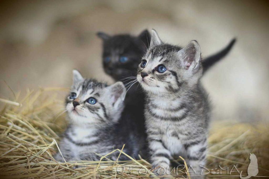Koťata a jejich oči