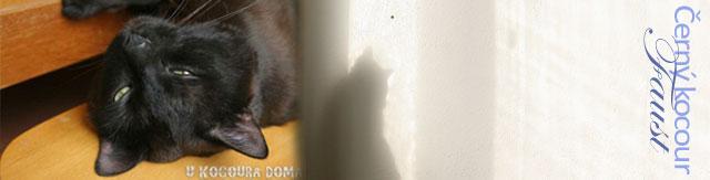 Máme doma kocoura, černého kocoura!