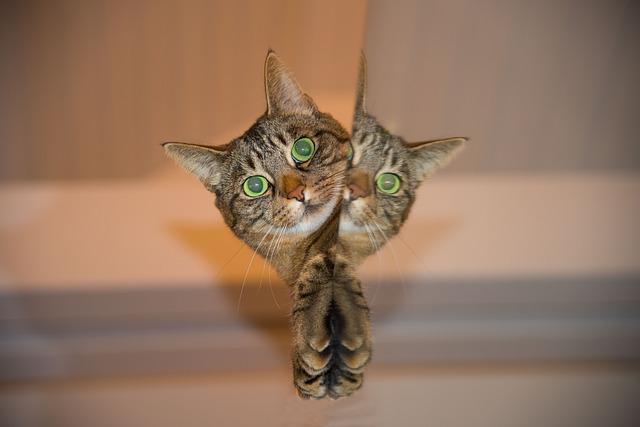 Kočka - mourek