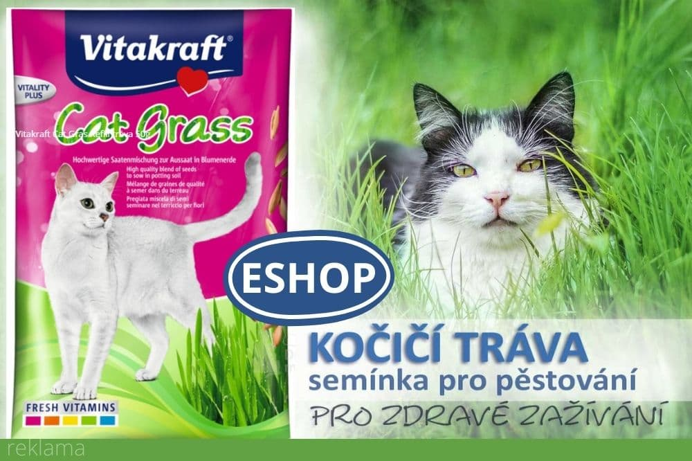 Kočičí tráva k pěstování