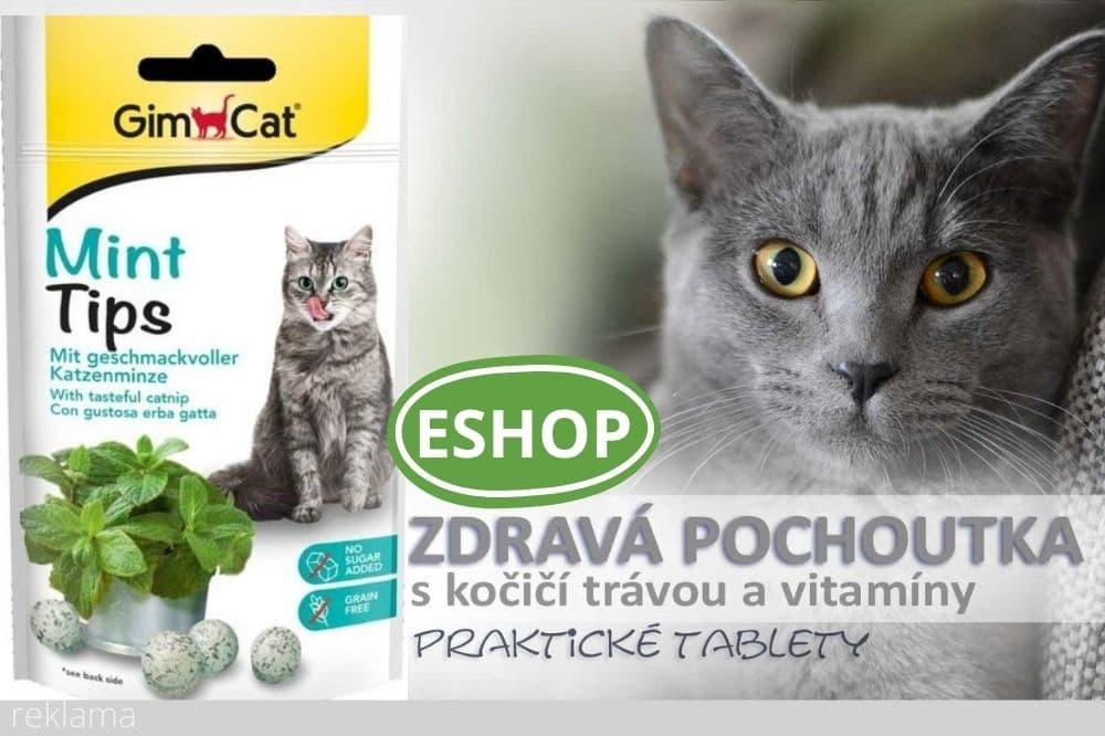 Kočičí tráva jako tablety