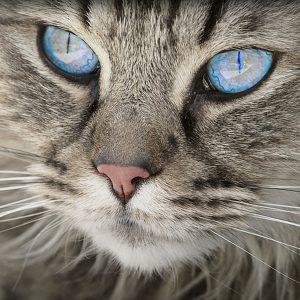 Jde o ten pocit A3 - kočičí oči