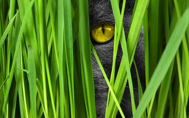 Kočka a tráva