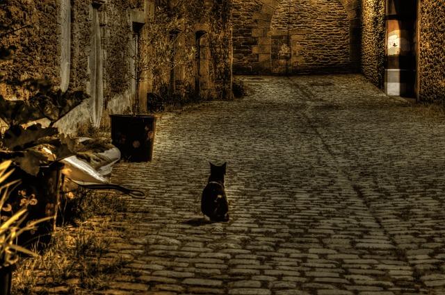 Kočka v noci, kočičí oči svítí
