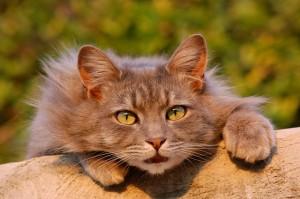 Kočka a její drápky