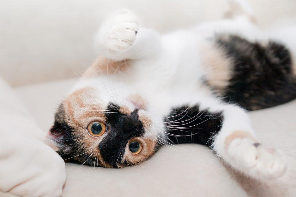 Kočka - škrabadlo