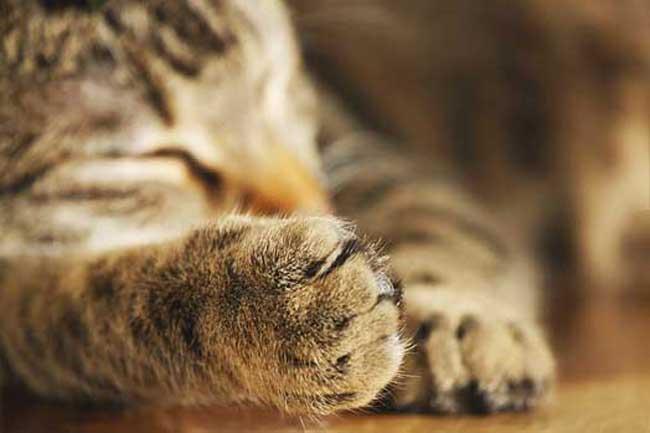 Stříhání drápků. Drápky a škrabadlo pro kočky – jak to spolu souvisí?