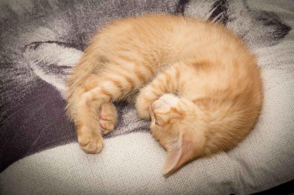 Základní výbava pro kočky? Co všechno kočka potřebuje? Co by vám doma nemělo chybět?