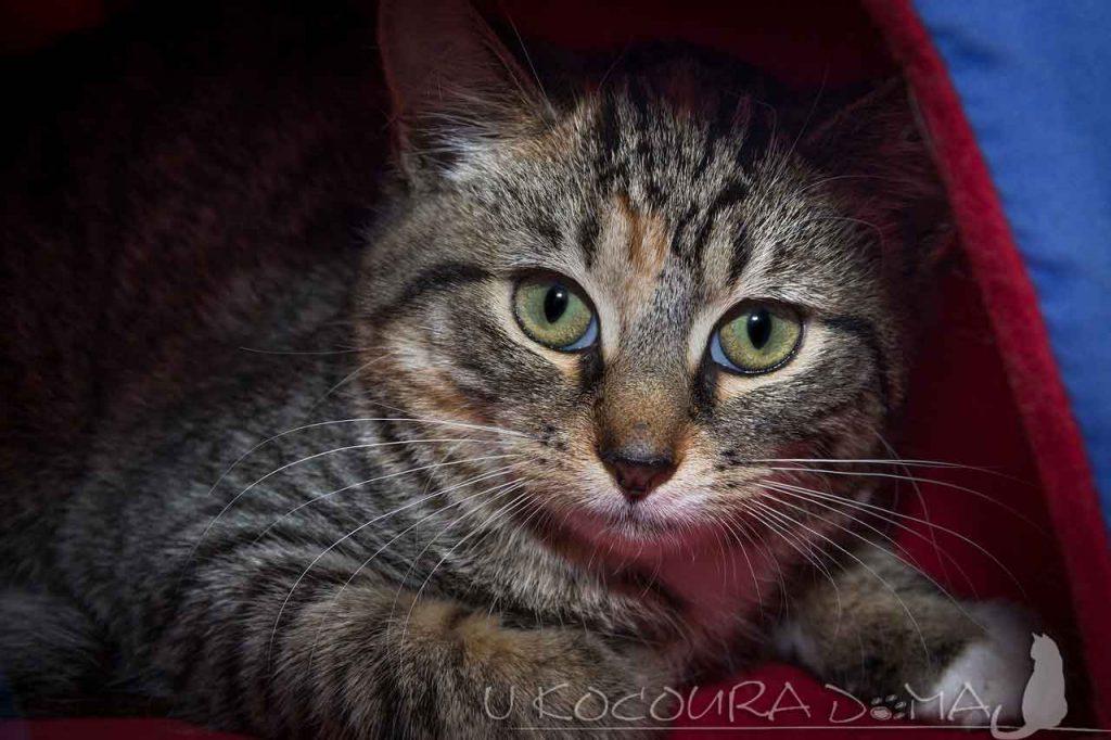 Mžurka u kočky