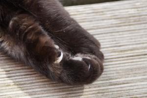 Kočičí drápky
