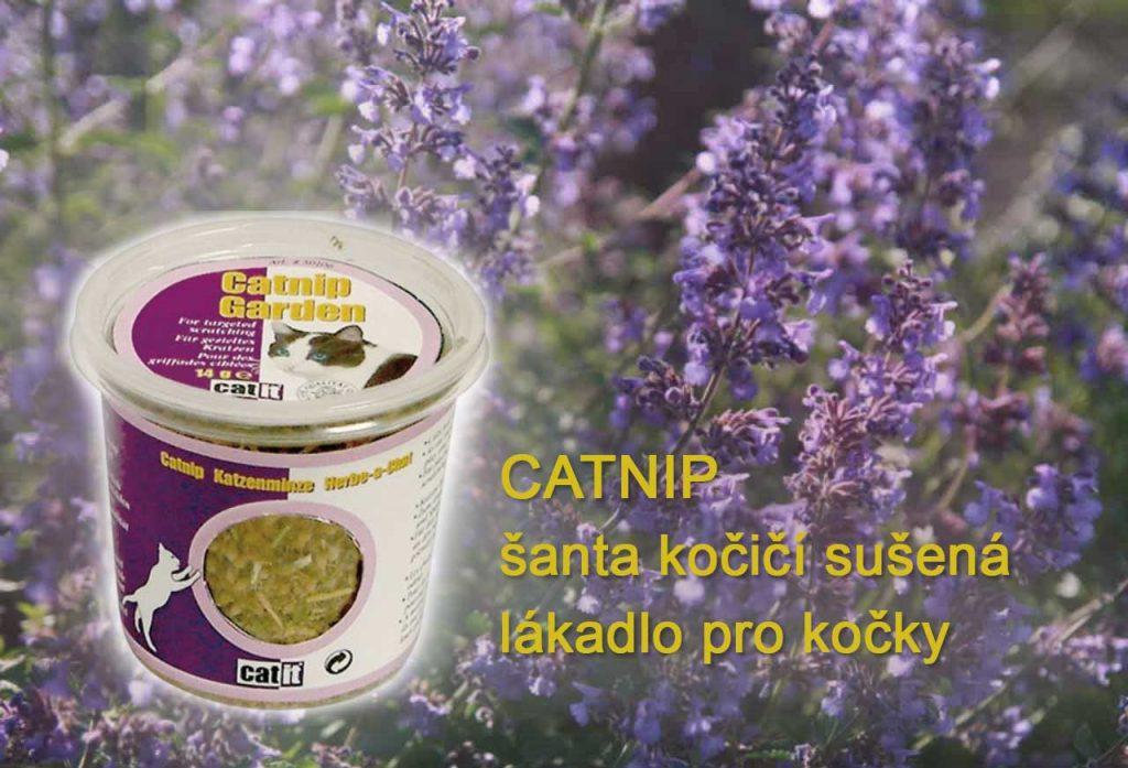 Šanta kočičí sušená, catnip
