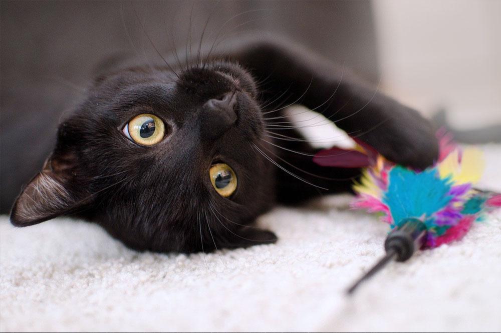 Kočka a hračka