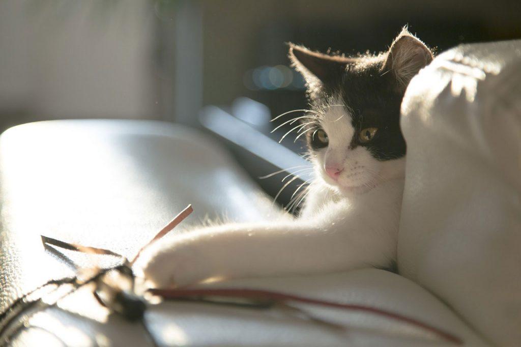 Kočičí hračky, ty, se kterými si kočky opravdu hrají