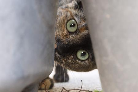 Kočka - skrýš