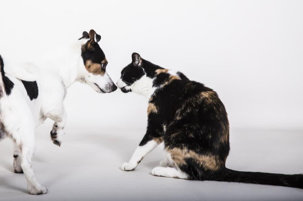 Pes nebo kočka?