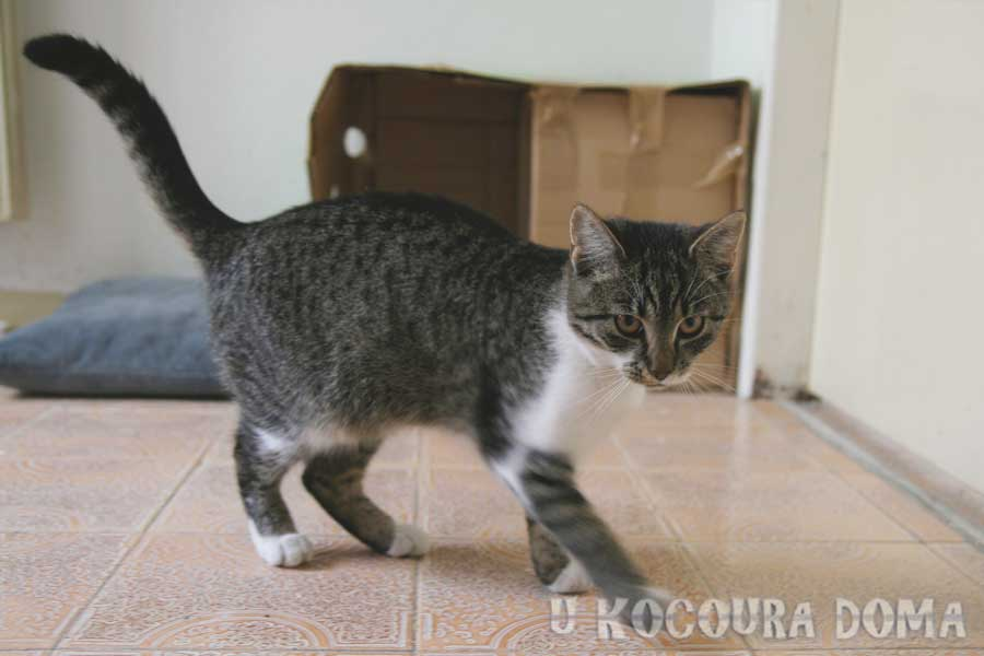 kocicka_a1