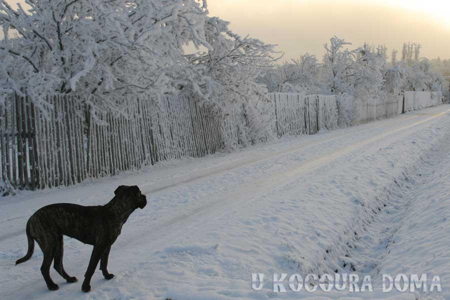 zima_a2