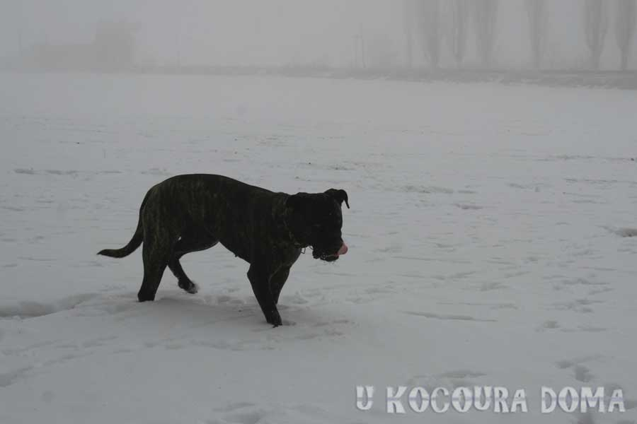 zima_a7