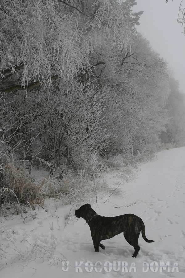 zima_a8
