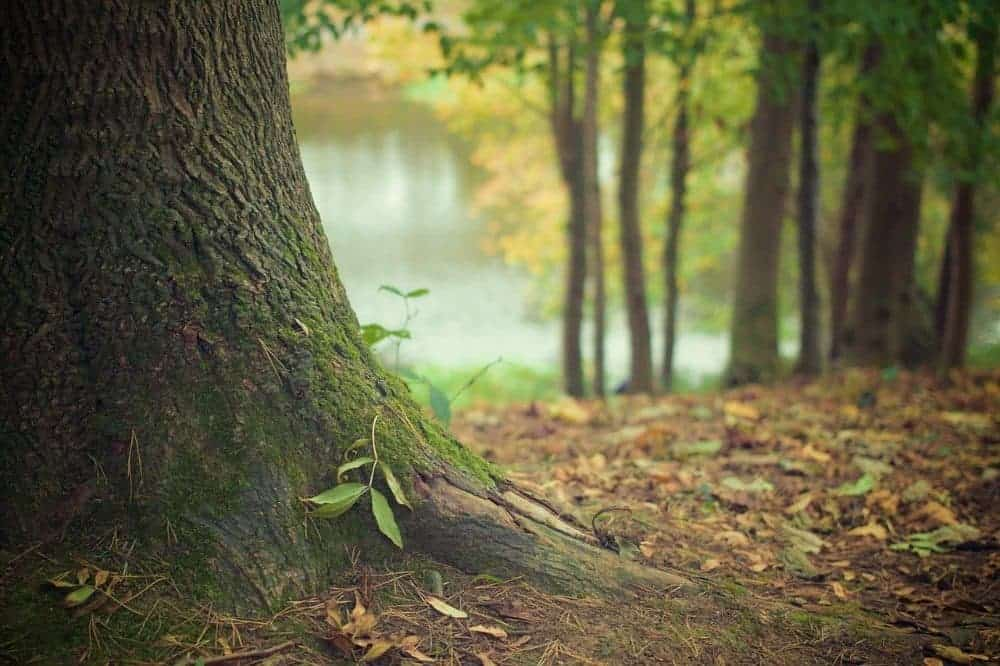 Strom, den stromů