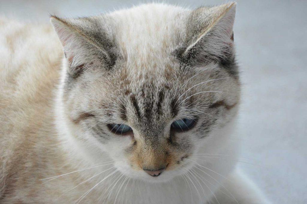 jak udržet kočička pevně