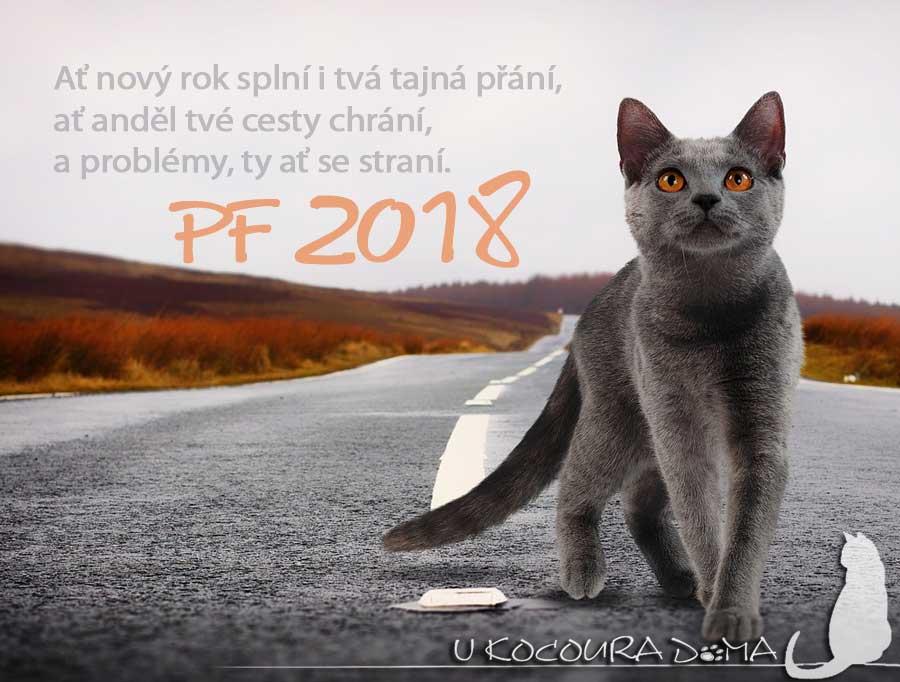 obrázky pf kočička
