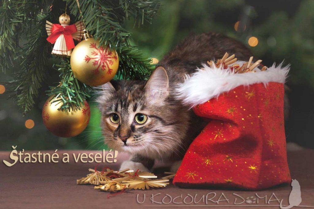Vánoční přání od kocoura