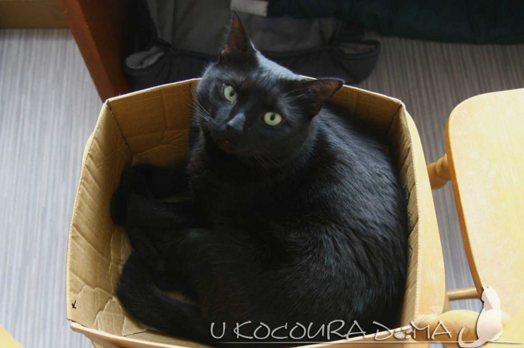 Černá kočička fotogalerie