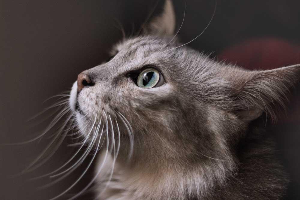 Kočka a stres