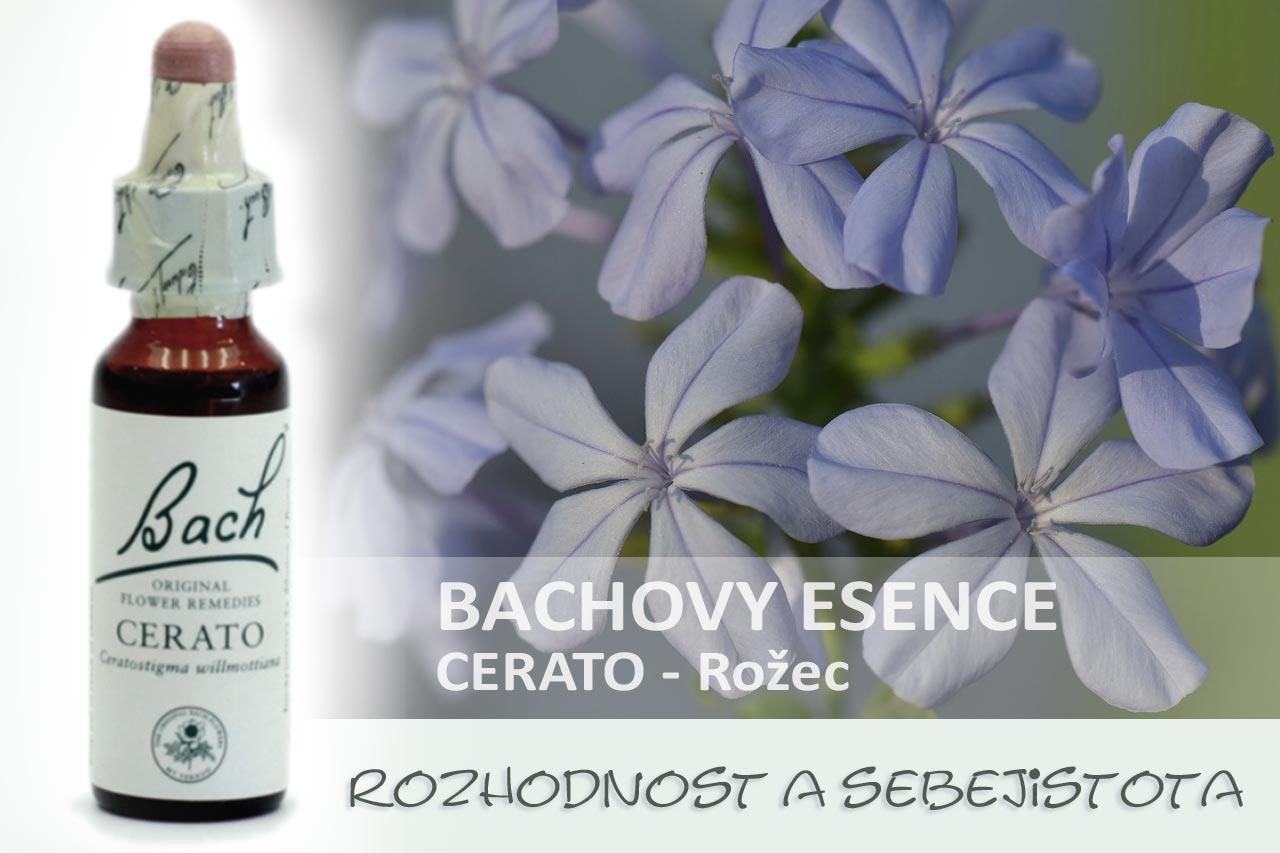 Bachovky - Cerato, rožec